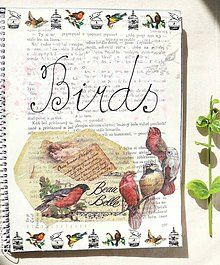 Birds - pocketbook