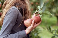 Apple Picking ~ Inspiration for Fall Apple Farm, Apple Orchard, Cup Of Jo, Apple Season, Apple Harvest, Apple Tree, Red Apple, Country Life, Country Farm
