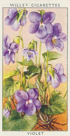 The Language of Flowers - Purple Violet = Daydreaming Vintage Greeting Cards, Vintage Ephemera, Vintage Postcards, Botanical Illustration, Botanical Prints, Violet Tattoo, Images Vintage, Sweet Violets, Language Of Flowers