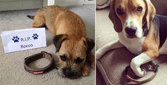 Delle foto di cani senza collare in onore di un cucciolo morto tragicamente…