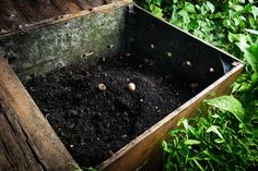 Rose Gardening For Beginners If you are looking to make compost fast, then a summer compost pile is the answer. Summertime is the perfect time to make quick compost! Faire Son Compost, Compost Tea, Garden Compost, Worm Composting, Garden Soil, Leaf Compost, Composting Process, Potager Garden, Vegetable Garden