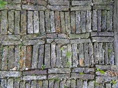 """Brick bookcase"" i.e., brick path...Photo by Jim Forest"