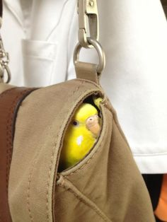 Stow away from the pet shop ...