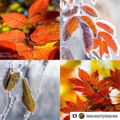 Thank you!! #Repost @leaveonlyleaves with @repostapp  /\  RANDOMNESS WINNERS   Congratulations! Please check out these winners' profiles: TL: @limekeyman TR: @theripics BL: @alf60pics BR: @takafumiito    Featured By: @darktranquility  TO BE FEATURED ADD @leaveonlyleaves TAG: #leaveonlyleaves There are many more to come so stay tuned invite your friends and keep tagging!!!