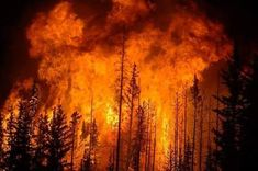 While climate change deniers are still denying climate change, the bushfires ravaging many parts of Australia are undercutting their efforts. Tennessee Fire, Fire Photography, Western Landscape, California Wildfires, New England Fall, Wild Fire, Fire Art, Pine Forest, The Real World