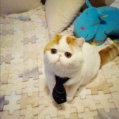 Le chat le plus mignon du monde