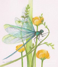 A6 Dragonfly Greeting Card