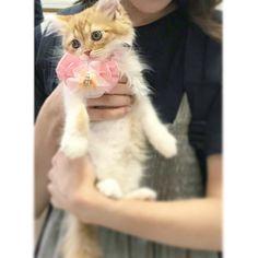 ○ 去年の夏初めてうちに来た時はこんなに小さかったのに〜 ・ ・ ・ #cat #love #small #photo #neco #snap #cute #girl #momo #Kittycat #baby #animal #lovely #photography #momo_snap #vsco #vscoworld #vscocam #猫 #愛猫 #猫好き #もも #ねこ #女の子 #ねこすたぐらむ  #ねこ部 #ねこ好き #ねこラブ #ねこのいる暮らし  #ねこずきさんと繋がりたい