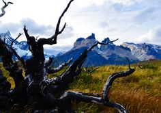 Patagonia Chile :: The grassy fields amoung the Torres del Paine :: 46503264 [OC] #reddit