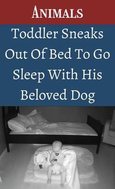 Paige Knudtson grew up with a boxer, so when she found out she was pregnant with her son Finn, she went out and adopted one from a local shelter. #Toddler #Sneaks #Sleep #BelovedDog Pimple Solution, Baby Snowsuit, Two Best Friends, Life Rules, Sleeping Dogs, Soft Dolls, Go To Sleep, Found Out, Fitness Goals