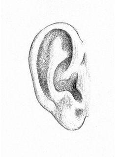 Voorbeeld van een oor.