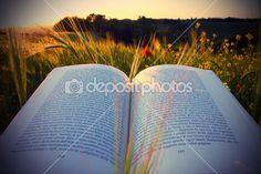 Kitap - Stok İmaj #16833415