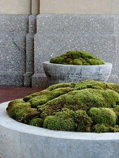 wglandscape:  via gardenwright.blogspot.com