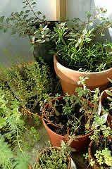 Glossário jardinagem