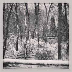 My Word with Douglas E. Welch » Photo: Winter scene in black and white #b&w #nature via Instagram