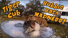 OMG how adorable!! I Want one or several!!! Tiger Cub Bubble Bath MADNESS!!!