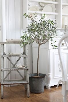 A little olive tree in an old zinc bucket---how French is that?