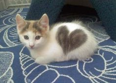 Kitty with a heart