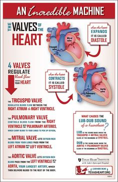 Fun infographic about the heart valves, part of the incredible cardiovascular machine by Texas Heart Institute.