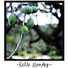 Hello Monday! Looking for images to share with your friends and followers? Come visit www.awarmhello.com