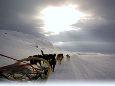 Bucket List. Dog sled into the arctic circle. Dogsledding in Tromso, Norway.