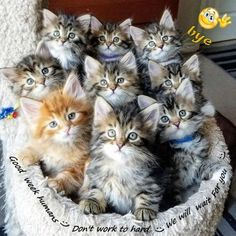 Cute Baby Cats, Cute Little Animals, Cute Funny Animals, Funny Cats, Baby Pets, Kittens Cutest Baby, Cats Humor, Kittens And Puppies, Funny Animal Pictures