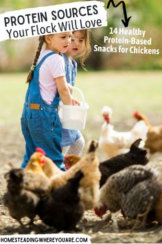 When your chickens are molting or facing cold temperatures in the winter, it's time to give your flcok some protein sources for chickens. Try feeding your flock cooked eggs, meat trimmings, and pumpkin seeds. Check out all these healthy, protein-based snacks for chickens. #chickens #flocks Snacks For Chickens, Raising Backyard Chickens, Sources Of Calcium, Protein Sources, Chicken Feed, Chicken Eggs, Healthy Protein, Protein Snacks, Chicken Protein