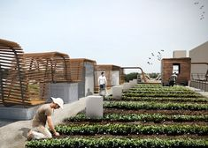 A photo rendering of The Food Roof, which is planned to be a rooftop community sponsored agriculture (CSA) farm. The Food Roof will included an outdoor gathering space for community events and educational opportunities. The site affords a view of downtown. The location of The Food Roof is 1335 Convention Plaza in downtown St. Louis. The Food Roof is a project of Urban Harvest STL.