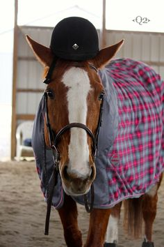saftey first and i love the horse blanket!