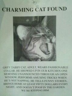 Charming Cat Found - Imgur