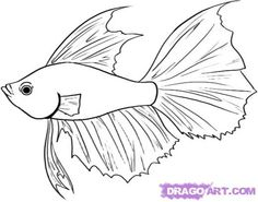Step 4. How to Draw a Betta Fish