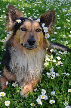 Such a pretty dog