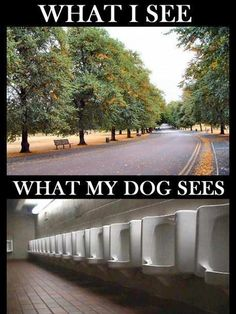 What my dog sees?