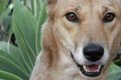 dingo-lindy-in-vogue_use-freely-medium-1