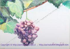 Titulo.Uvas del parrón   Tamaño: 25,5 x 35,5 cm.  Técnica: Dibujo pintado a lápiz sobre papel  por Zarina Tollini  Puedes ver más zarinatollini.blo... www.facebook.com/...
