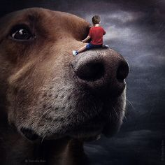 """In her project """"Help Dogs with Images,"""" Hungary-based artist Sarolta Bán uses digital photo manipulation skills to promote shelter animals in need of new homes . Photoshop Photography, Dog Photography, Creative Photography, Photography Tutorials, Modern Photography, Digital Photography, Surreal Photos, Surreal Art, Surreal Portraits"""