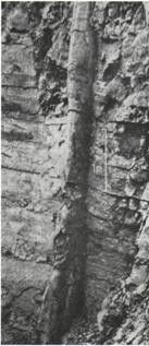 Polystrate tree fossils, Geologic column anomalies