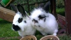 Bunnies are so alike but so different - December 7, 2012 by tonya