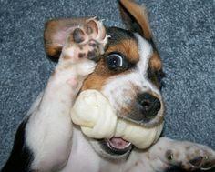 Puppies - Hľadať Googlom