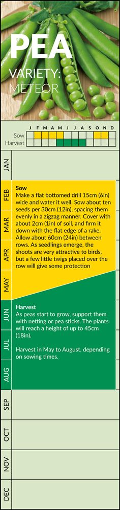 Pea Gardening Calendar Strip – Belmont Bonsai