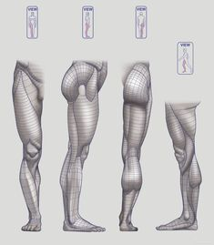 Anatomy Next - Anatomy of Lower limb: Block-outs