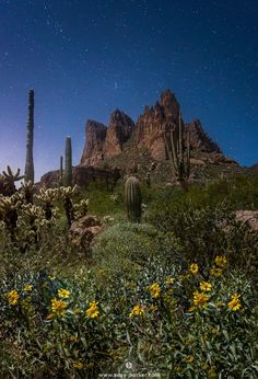 Wildflowers blooming under a starry night in the Superstition Wilderness Arizona [OC] [10801557] #reddit