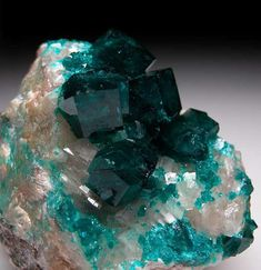 Four large Dioptase crystals to 1.3 cm on white Calcite.