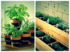 herb Garden Potted Ideas   Potted herbs