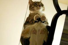 22 Gründe, warum alle Katzen-Besitzer einen Glastisch brauchen