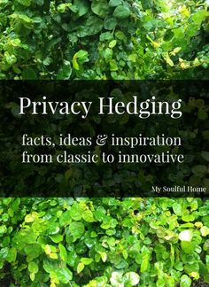 Privacy hedge http://mysoulfulhome.com
