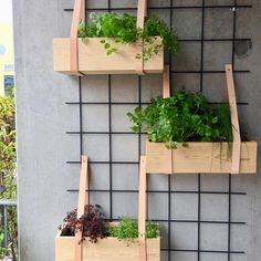 Small Balcony Decor, Balcony Plants, House Plants Decor, Home Wall Decor, Balcony Garden, Home Decor Inspiration, Garden Inspiration, Decor Ideas, Diy Arts And Crafts