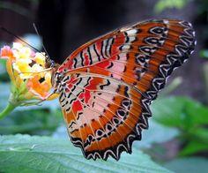 Risultato della ricerca immagini di Google per http://butterfliespictures.org/colourful-butterfly.jpg