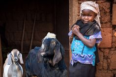 As Billy and Grampa Goat wrap up their visit in Burundi, meet six-year-old Chania with them and see the many ways that goats have helped her family! Read what motivates goats to be helpful to people around the world … and what makes them—as well as the fathers they're meeting—feel proud. #FollowtheGoats
