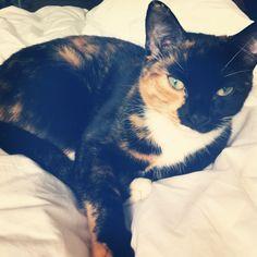 Sadie Cat | Pawshake